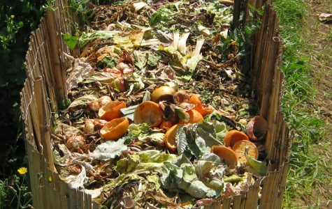 Compost: A pile of fun