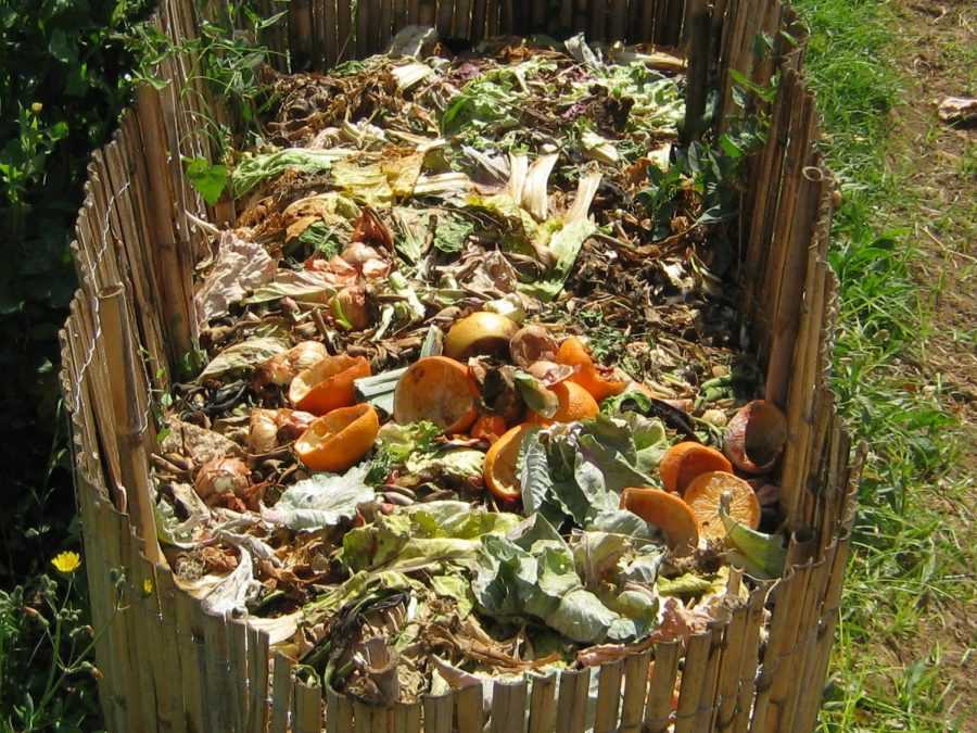 Compost+with+a+mixture+of+organic+material.