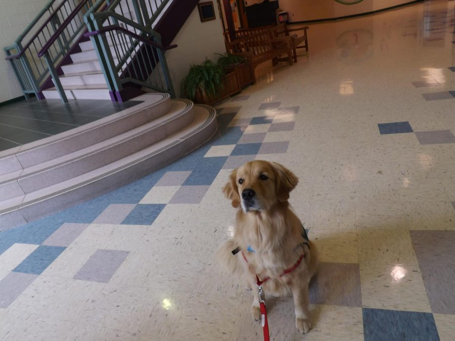 Tucker, the therapy dog, waits for a treat on Oct. 3, during his visit in Rachel Carson Middle School.