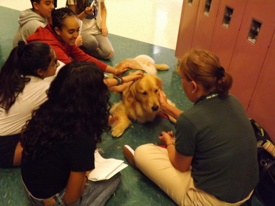 Tucker, the therapy dog, gets students from Mrs. Isoldis history class read and pet him on Oct. 3, during his visit in Rachel Carson Middle School.