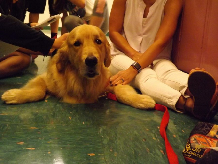 Tucker, the therapy dog, seems excited to be visiting Rachel Carson Middle School on Oct. 3, and is happy to make new friends.