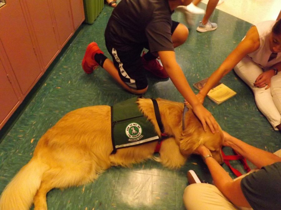 Tucker, the therapy dog, gets students from Mrs. Isoldis history class read to him on Oct. 3, during his visit in Rachel Carson Middle School.